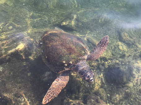 Work Experience: Turtle Conservation
