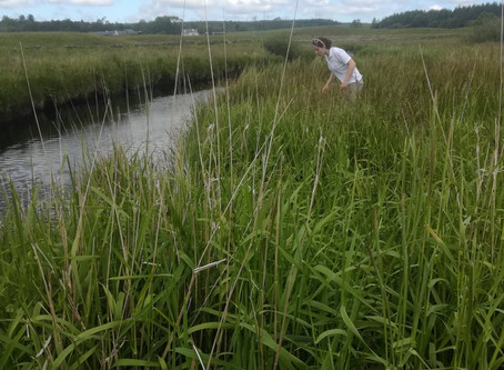 Work Experience: Galloway Fisheries Trust