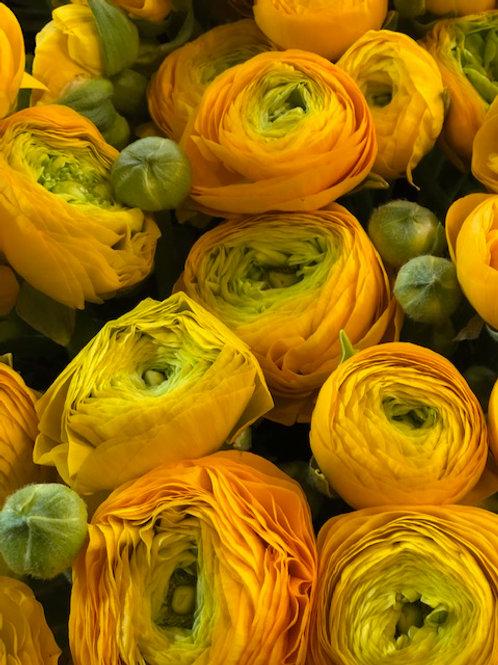 Bouquet di 11 Ranuncoli con verde decorativo