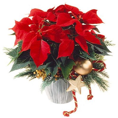 Stella di Natale con decorazione