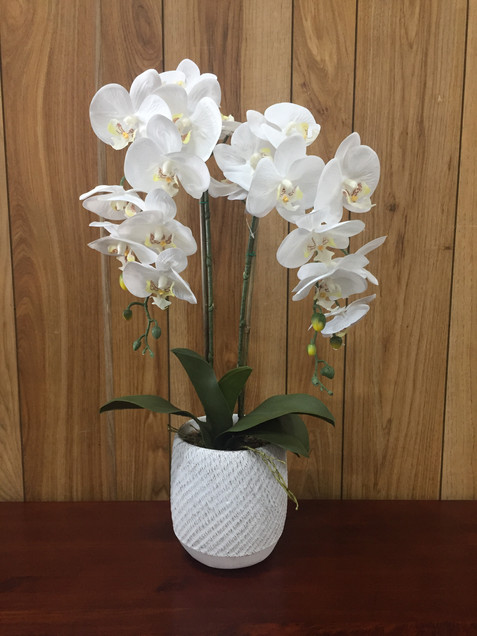 Orchid 2 Stem White.