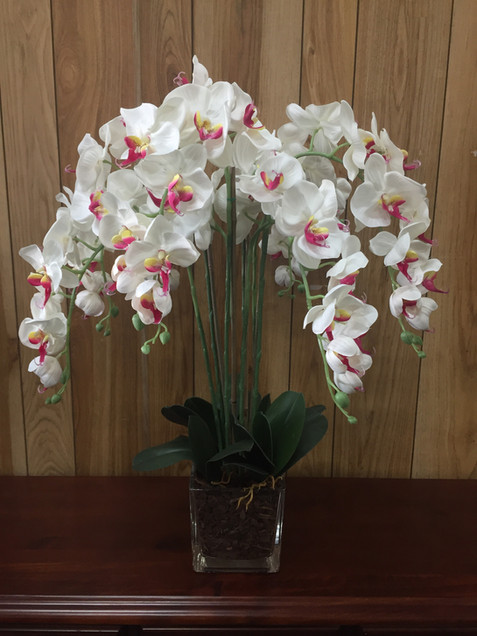 Orchid White With Pink Stamen