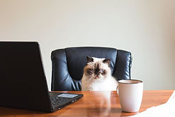 coffee-business-office-animals.jpg