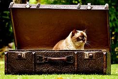 luggage-2442126_960_720.jpg