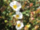 Etoiles De La Terre: spécialiste des Elixirs Floraux de différentes régions du monde