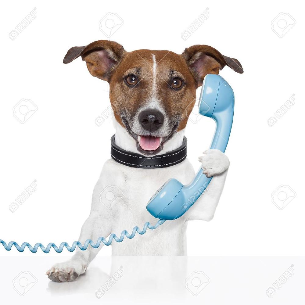 Communiquer à son animal