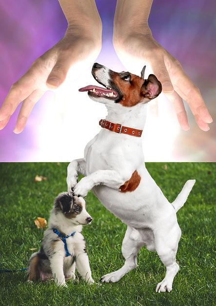 soin énergétique pour animaux, Etoiles D