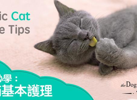貓貓基本護理