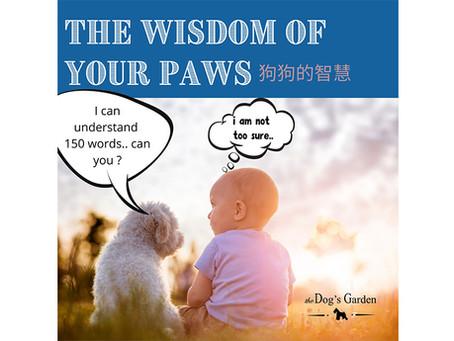 狗狗的智慧