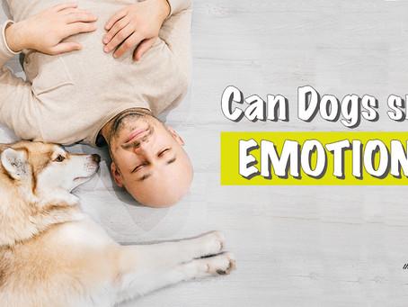 狗狗可聞到人類的情緒❓