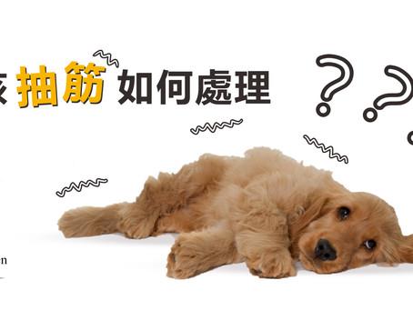 狗狗抽筋點算好?