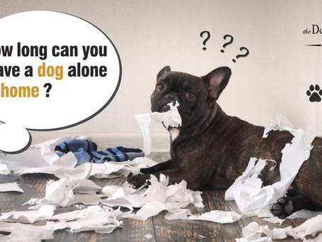 可以讓狗狗獨留家中多久?