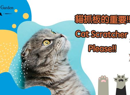 貓抓板的重要