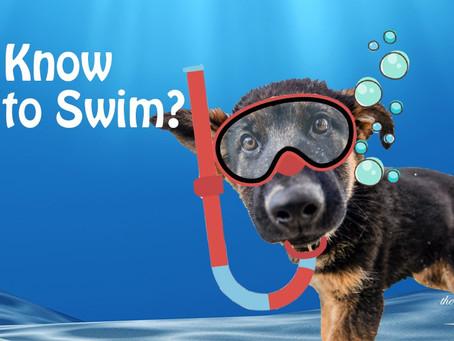 狗狗天生就識得游水?