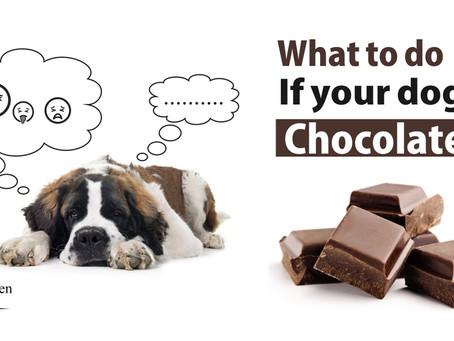 狗狗吃了巧克力怎麼樣?