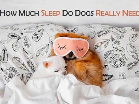 狗狗睡眠時間應該係幾多先夠?