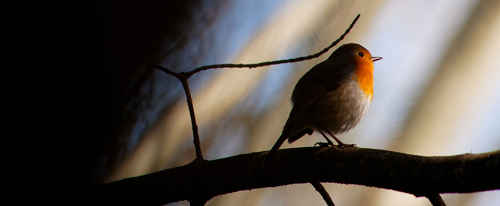 Little Bird_edited.jpg