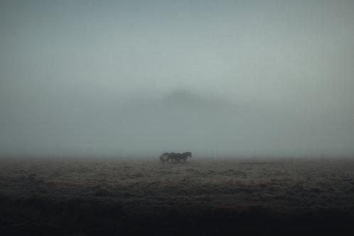 Utopia - Nick Rasmussen