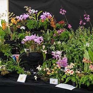 Malvern Orchid Show