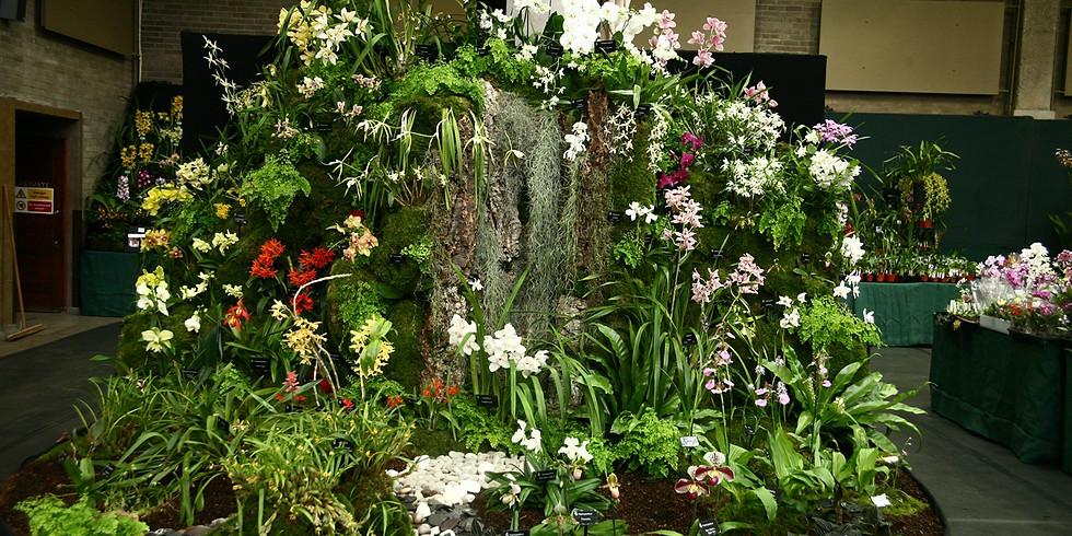 OSGB Orchid Spring Show