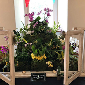 Welsh Orchid Festival