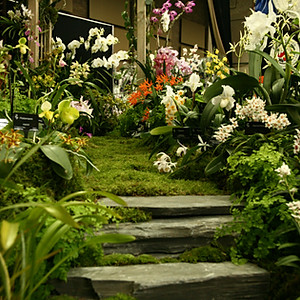 RHS London Orchid Show