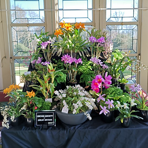 Bournemouth Orchid Society
