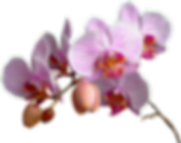 blooming-flower-png-12 (1).png
