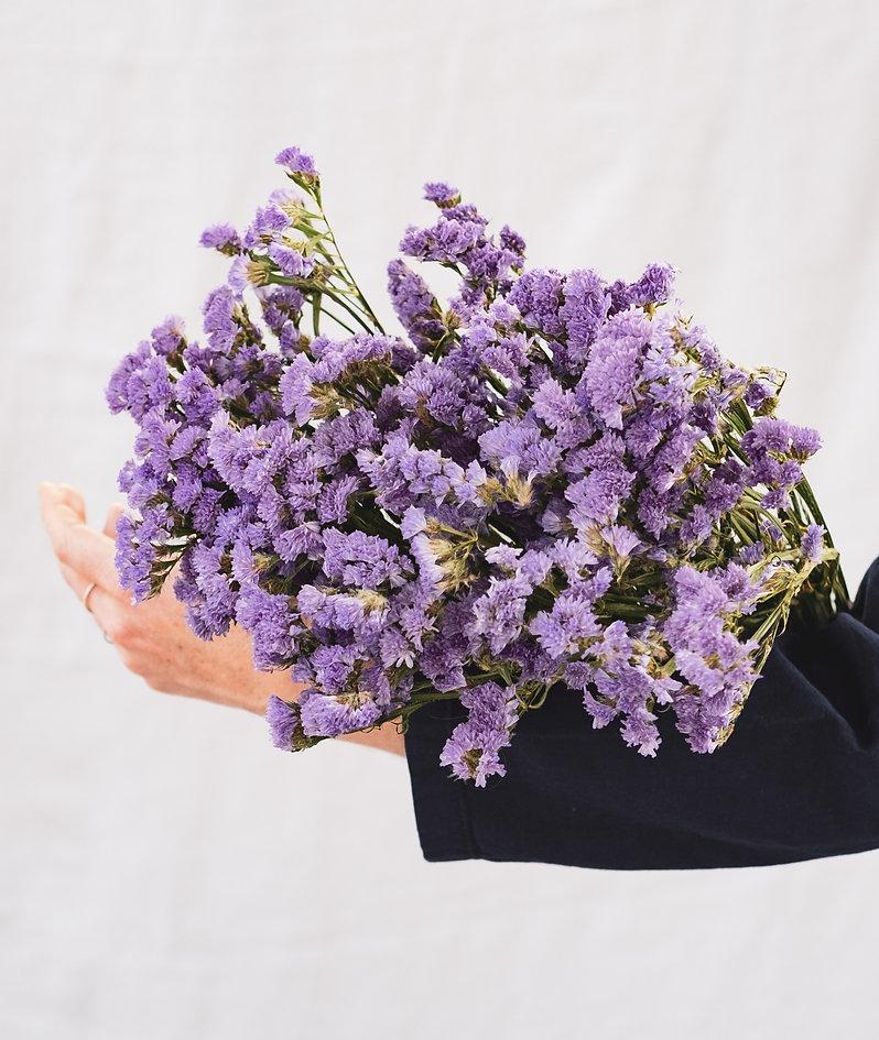 Trockenblumen lilafarben