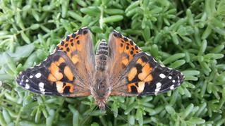 Unser Schmetterlings- und Marienkäferprojekt im Mai/Juni