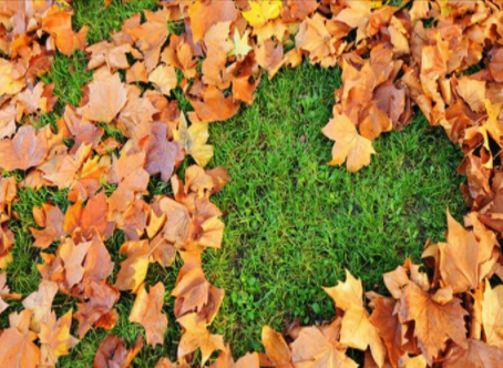 Fall For A Great Lawn