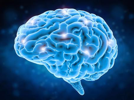 Our Human Brain