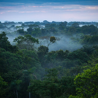 Arduinna: The Forest