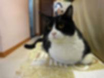 "上環梁太線面-本 Blogger-""線面に初挑戦&看板猫""的照片"