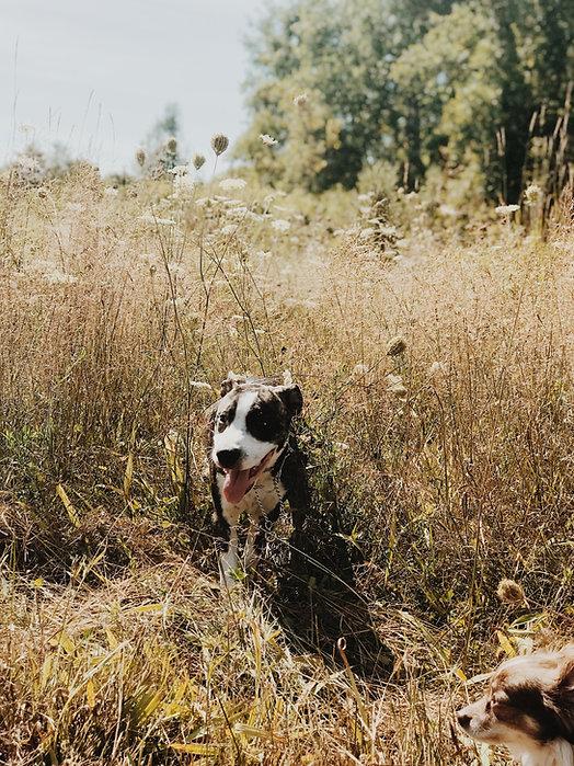 happy healthy dogs enjoying spring