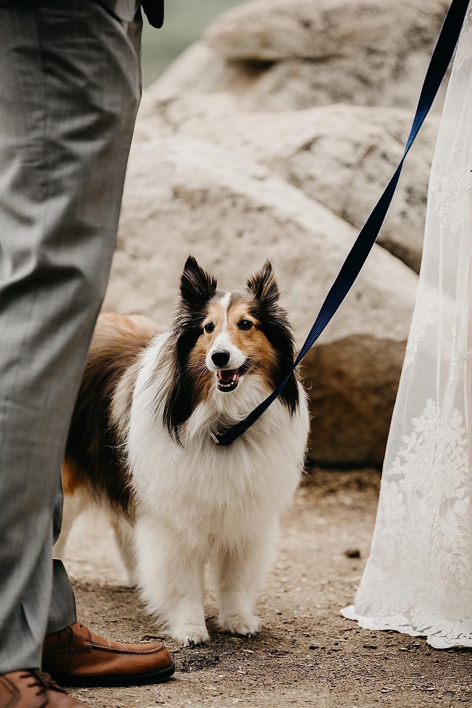 Sapphire Point wedding dog