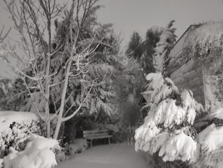Snow, Safari and Zachor