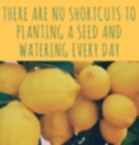 Citrus Three social media marketing