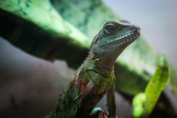Lizard, Exotic Animal Sanctuary, Vero Beach