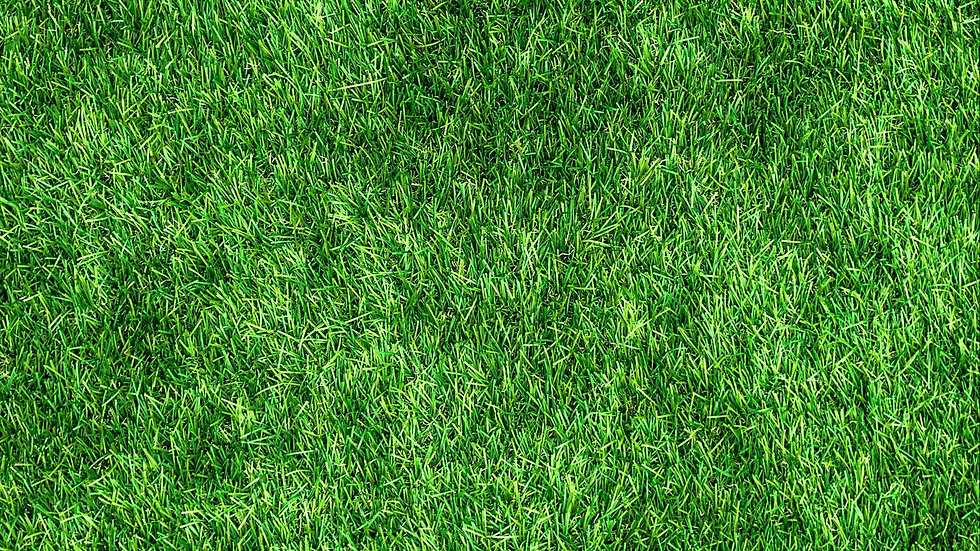lawn_grass_green_130374_1920x1080.jpg