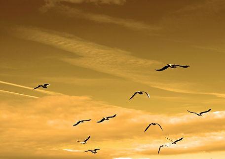 birds-84665_1280.jpg