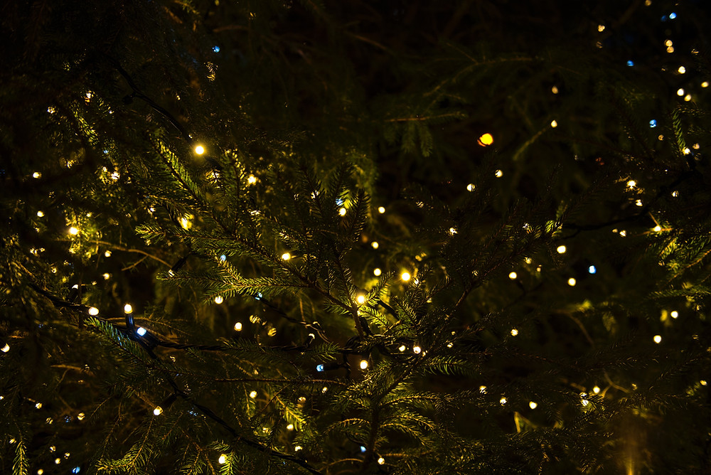 holiday lights in the tree