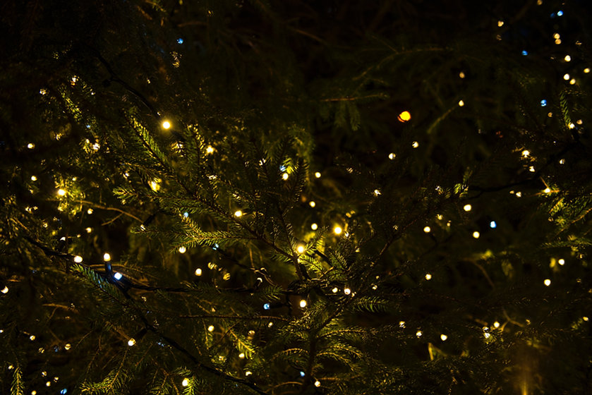 Christmas-Lights-On-Tree
