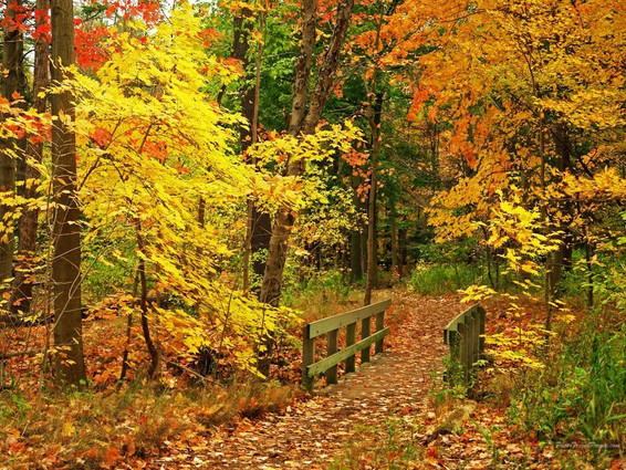 Beautiful-Fall-Wallpapers-autumn-1549621