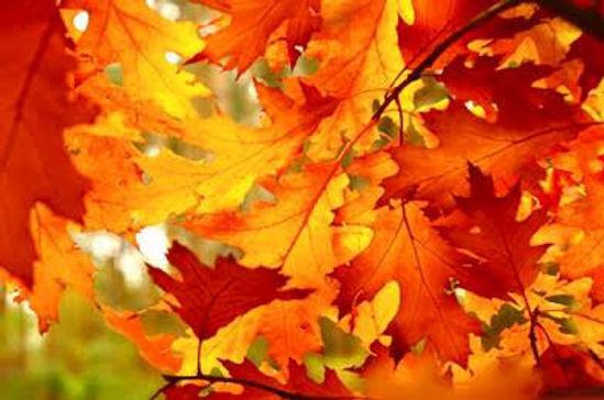 Autumn Colourful Leavers.jpg