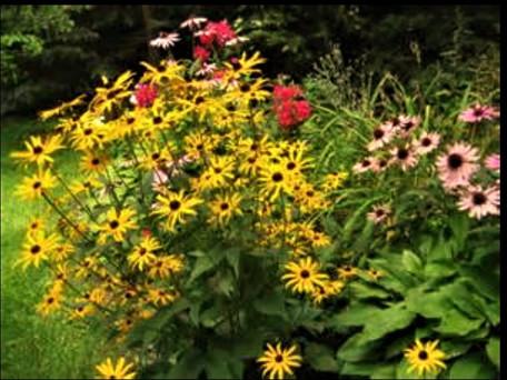 Claremont Flowers.jpg