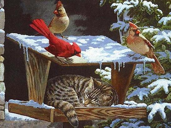 Cardinals near Bird Feeder - Cat in Wint