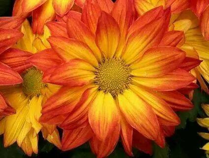 Yellow Orange Flower.jpg