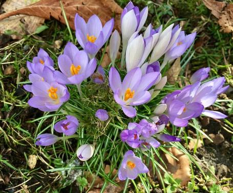 Early Spring Purple Flowers
