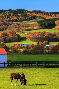 Autumn Country with Horses.jpg